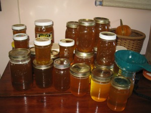 The honey harvest.
