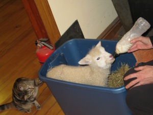 Ewela in her box.